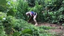 71 kök kenevir bitkisi ele geçirildi