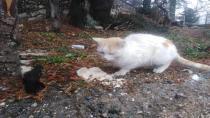 kedi ve köpekler yaylalarda mağdur edildi